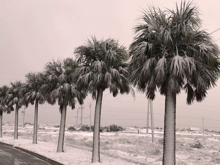 Snow covers the ground and the palm trees in San Antonio, Texas.